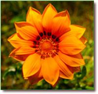 Artikel - Helende kracht van Bloemen